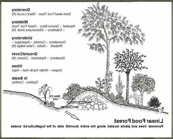 Permaculture: Permaculture Mauvaise Herbe | Ebook