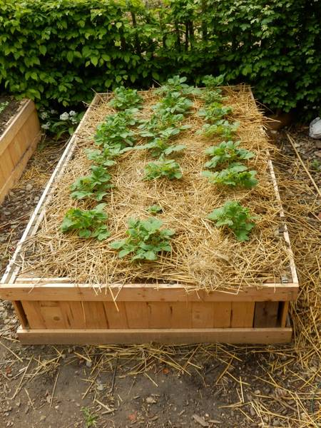 A lire Permaculture Step By Step Pdf   Renseignements