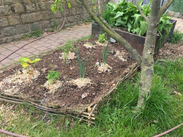 A lire Permaculture In Zone 9b | Conseils